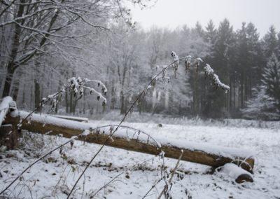 omgeving-sneeuw3